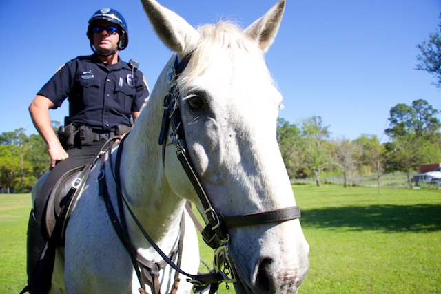 The GPD Mounted Unit, an Officer riding a horse
